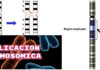 cuales son las enfermedades por duplicacion cromosomica