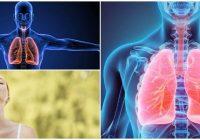 cual es la fisiología de la respiración branquial