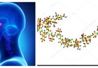 función de la hormona acth