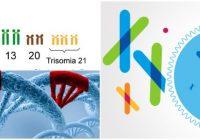 que son las mutaciones genomicas poliploidia
