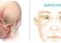 el nervio facial es un nervio craneal
