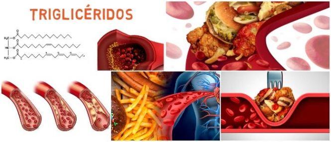 cual es la función de los trigliceridos