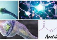 relacion entre la acetilcolina y el alzheimer