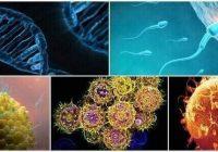 cual es la biología de las células germinales