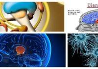 cual es la estructura del diencefalo