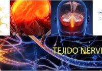 cual es la función del sistema nervioso central