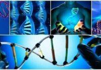 que es la información genética en biología