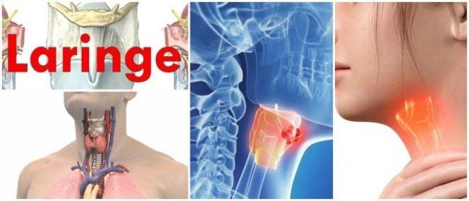 cual es la histología de la laringe