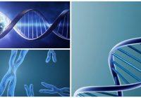 ejemplo de un mapa genético de adn