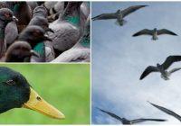 cual es la etimologia de la ornitofobia