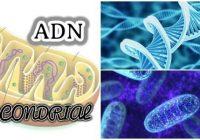 que es la herencia del adn mitocondrial