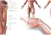 cual es la anatomía de la arteria femoral