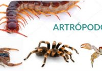 las arañas son artrópodos