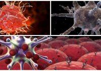 que son las células dendríticas linfoides