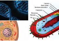 que es una celula vegetal