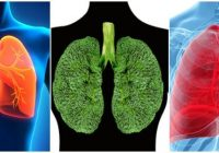 como limpiar los pulmones de un fumador