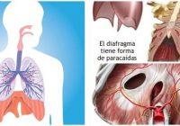 cual es la definición de diafragma