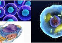 cual es la estructura y función celular de los seres vivos