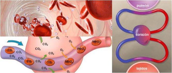 relación entre hipoxia tisular y monoxido de carbono