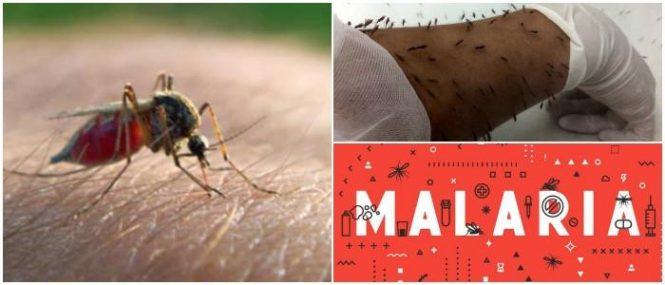 cual es el agente causal de la malaria