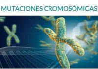 por que las mutaciones cromosómicas se forman desde el embarazo