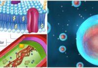 que es la pared celular bacteriana
