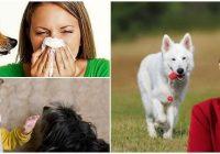 cuales son las consecuencias de la alergia a los perros en niños