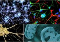 cuales son las células del sistema nervioso y sus funciones