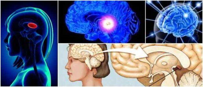 como activar la glandula pineal completamente
