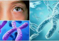 que es un cromosoma 22 en anillo