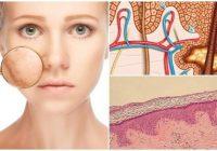 cual es la anatomía de la dermis