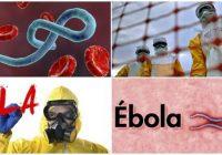 cual es el agente causal del ébola