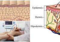 cual es la definición de epidermis