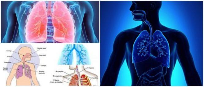 cual es la función del aparato respiratorio y sus partes