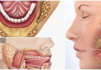 cuales son las glándulas salivales
