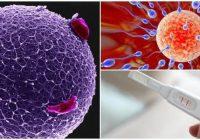 definición de la hormona antimulleriana