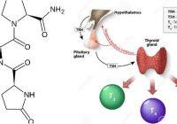 cuales son las funciones de la hormona trh