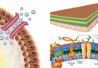 bioquímica de la membrana plasmática