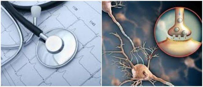 Parasimpático: Definición, Anatomía, Función, Diferencias y ...