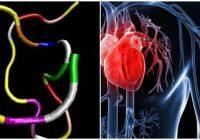 péptido natriurético auricular en el corazón