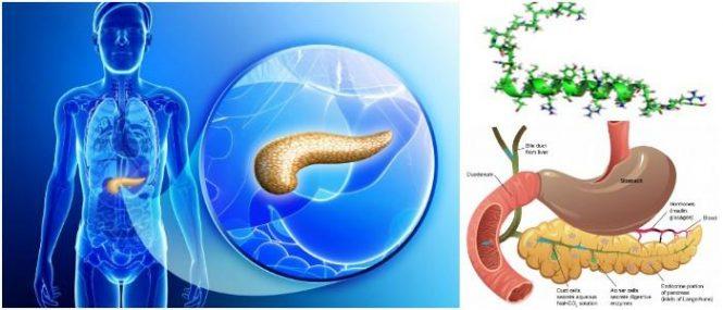 que significa polipéptido pancreático