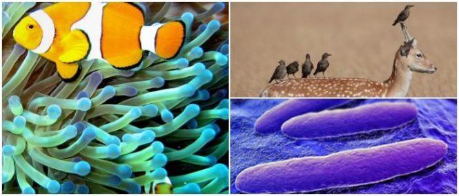 cuales son los ejemplos de simbiosis