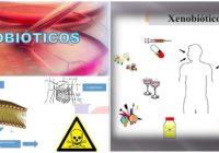 que son los xenobioticos ambientales