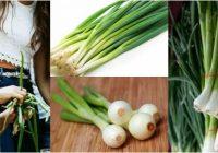 contenido nutricional de los cebollines cebollas verdes y cebollas