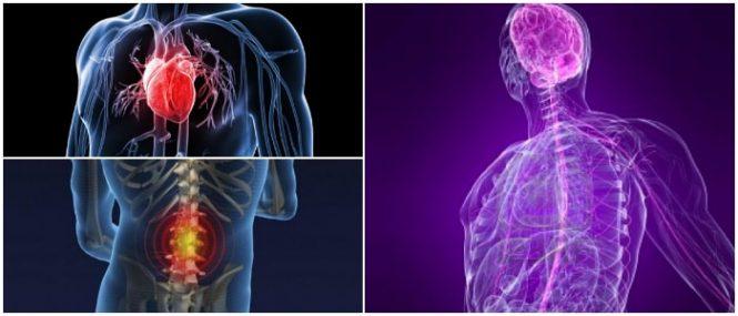 la fisiopatología y la hipertension