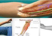 nervio cubital de la mano