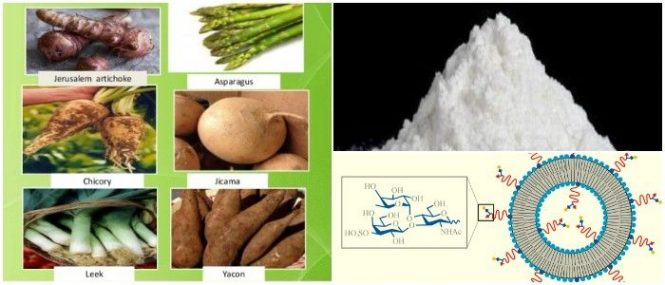oligosacáridos de la leche materna