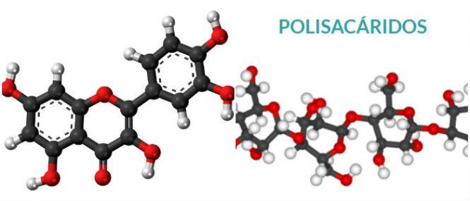 los polisacáridos y almidón glucógeno y celulosa
