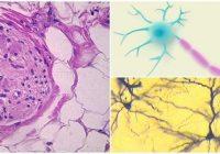 que es el tejido nervioso humano