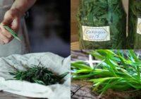 usos del estragon en la nutrición